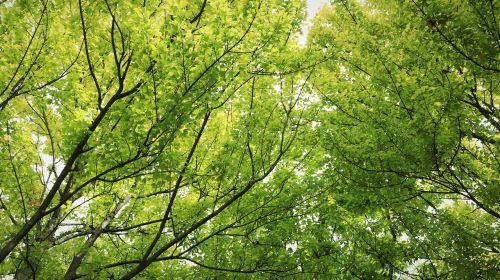 wood trees plants