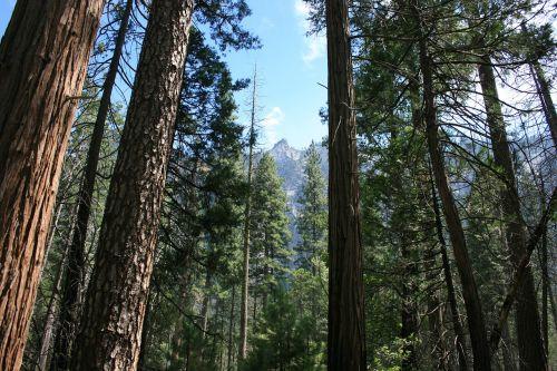 wood tree nature