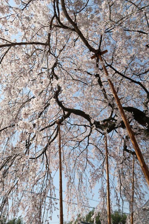 wood branch seasonal