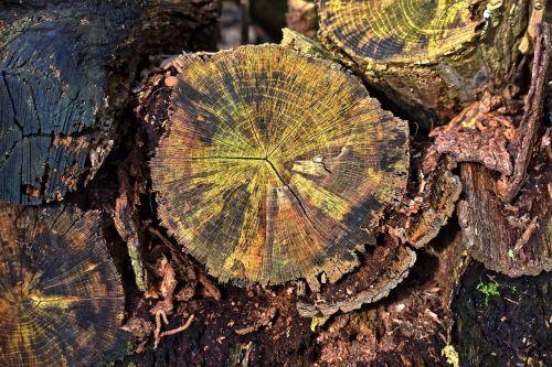mediena, žurnalas, supjaustyti, metų žiedai, grūdai, modelis, žievė, mediena, mediena, krūva, miškininkystė, iškirpti, seni rąstiniai lapai, senoji mediena, krekingo, ekologiškas, be honoraro mokesčio