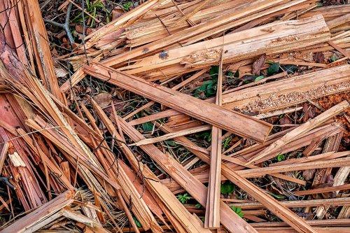 wood  chop wood  woods