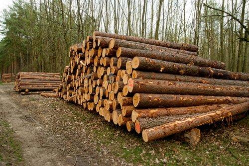 wood  tribe  tree