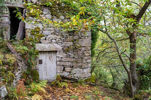 wood  nature  stone