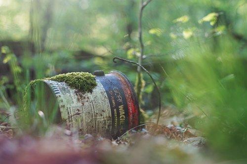 wood  nature  tree