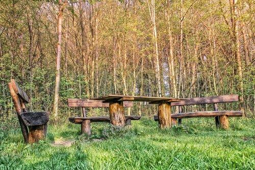 wood  nature  grass