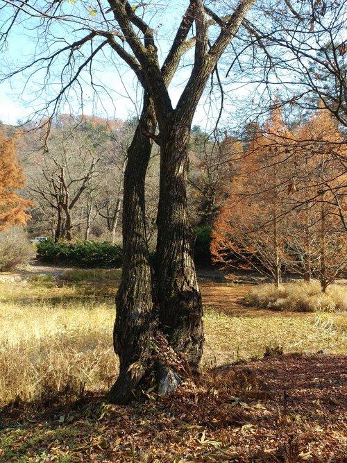 wood  autumn  nature