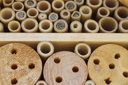 wood  insect  insect hotel