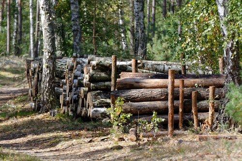 wood  bale  felling