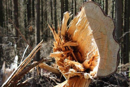 wood  tree  grubbing-up