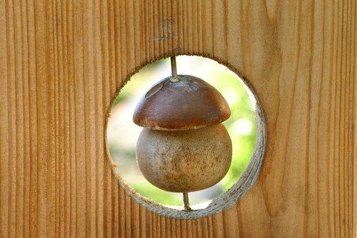 wood  scenery  mushroom