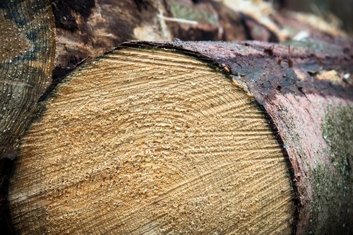 wood  log  forestry