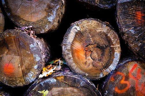 wood  log  nature