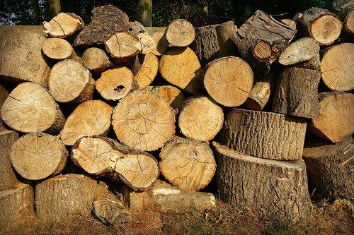 wood  chopped  log