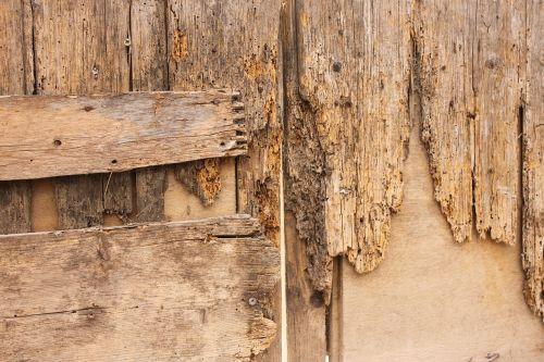 wood wood worm door