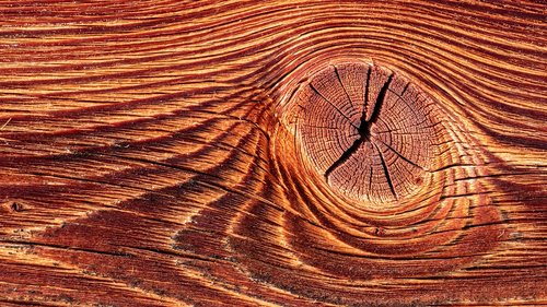 wood  structure  texture