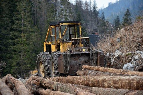 wood  slice  lumberjack
