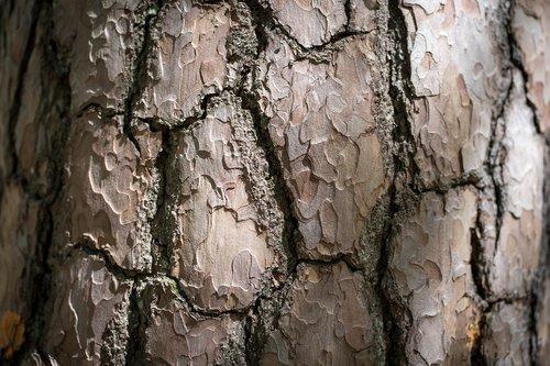 wood  log  pile of wood