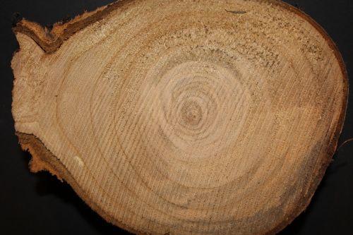 wood tree like