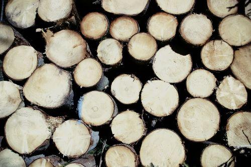 wood spar cut down