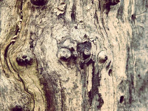 wood tree knots