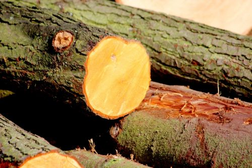 wood bark like