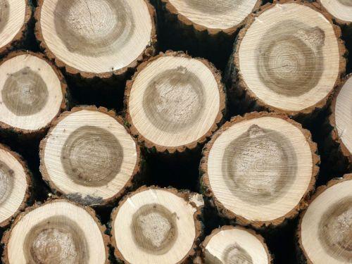 wood logging holzstapel