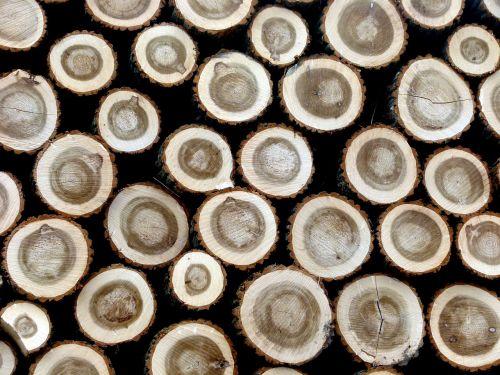 wood tree trunks hardwood