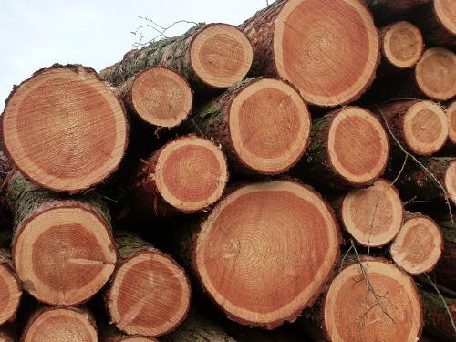 wood chop wood logging