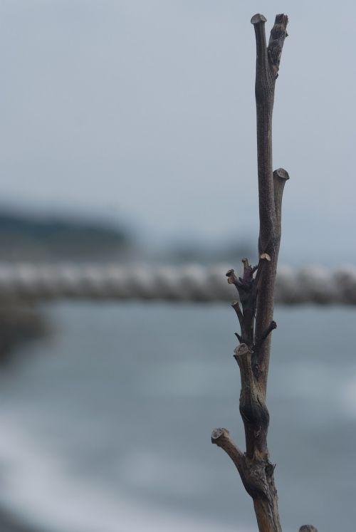 wood twig sea