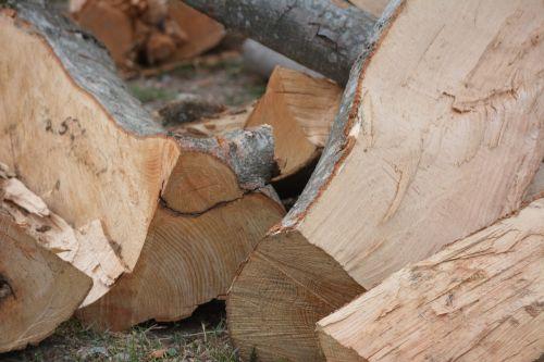 wood trunks trunks of trees