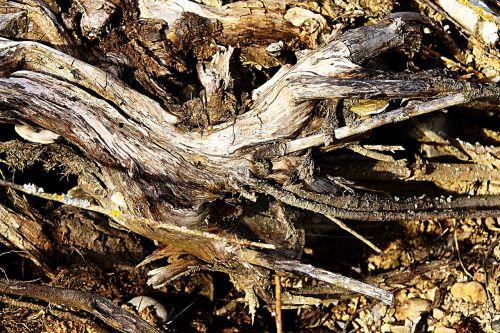 wood nature dry wood