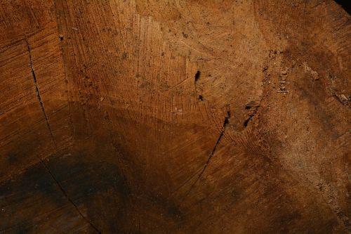 wood structure wood fibres