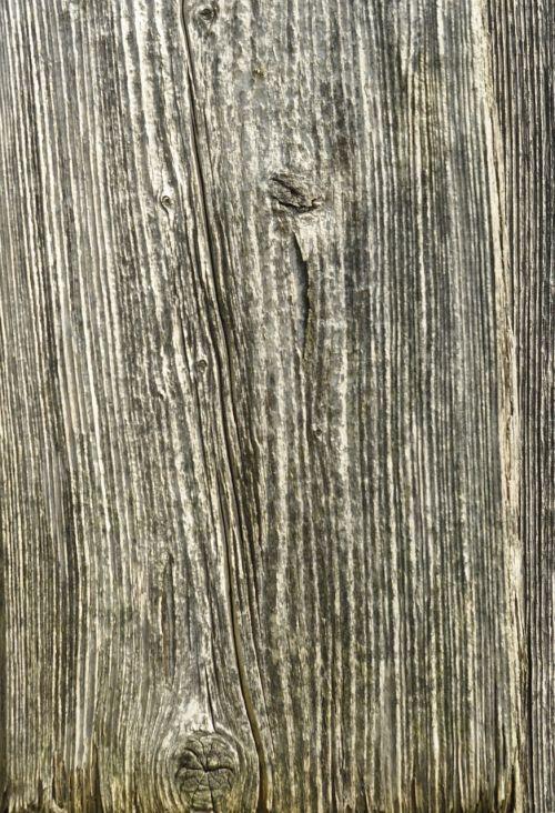 wood structure grain