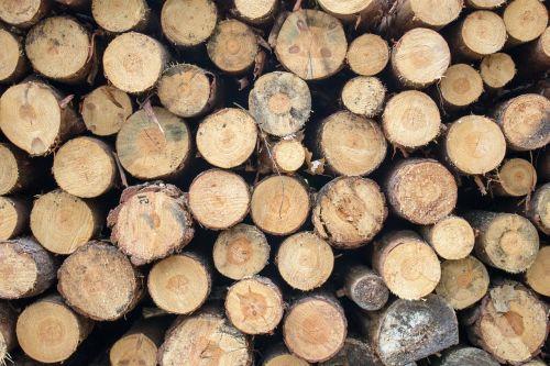 wood pine cut
