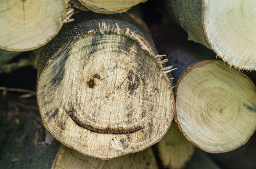 wood log laugh