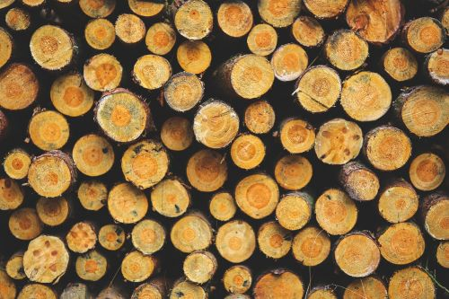 wood forest heating