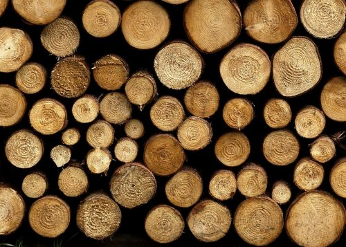 wood texture trunks