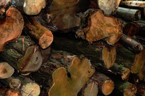 wood forest log