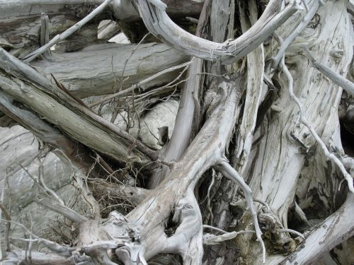 wood strike nature