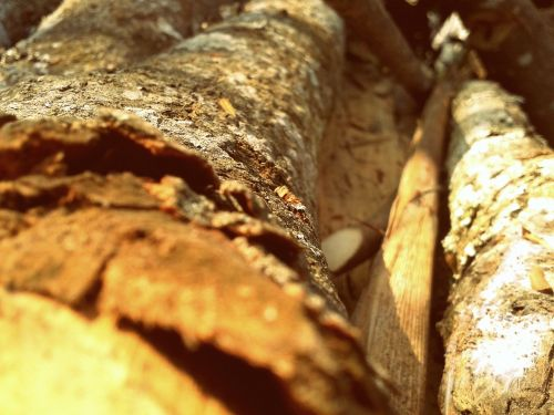 wood dry timber