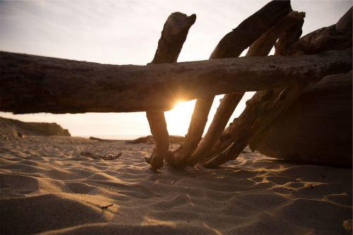 wood logs beach