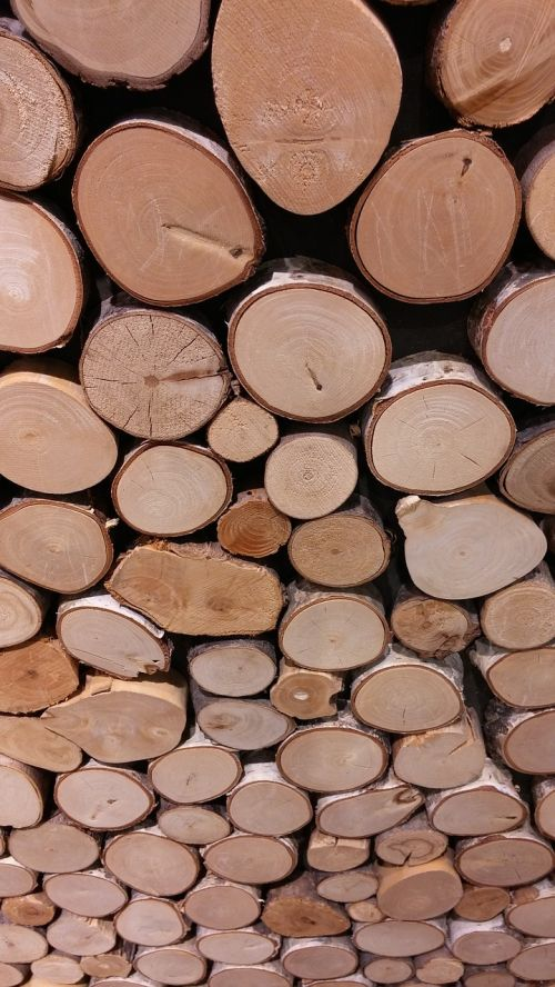 wood holzstapel growing stock
