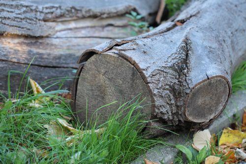 wood log lumber