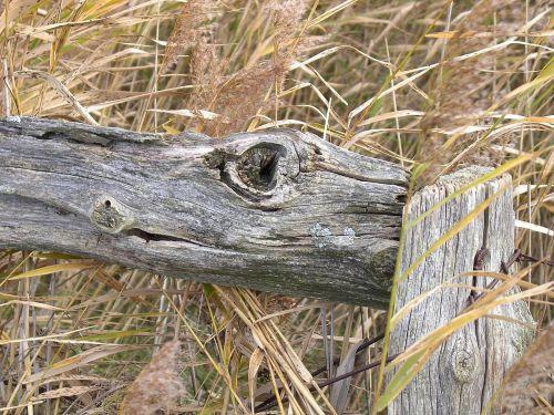 wood art fence sylt