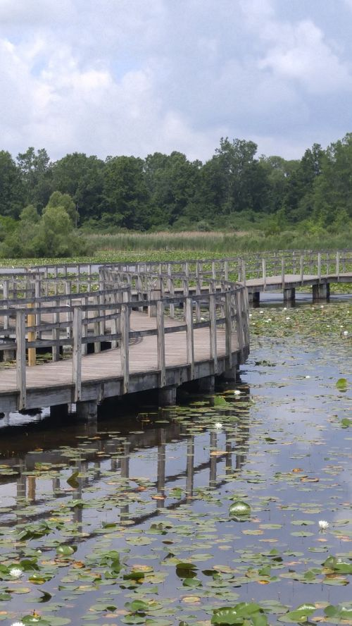 wood bridge water bridge