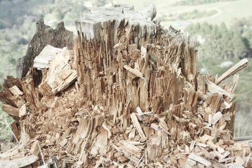 wood chips treestump broken
