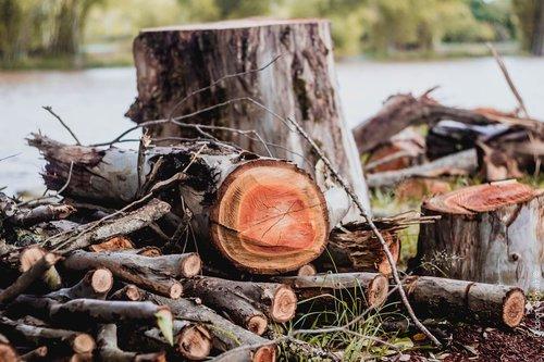 wood cut  wood  nature