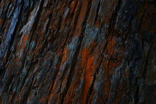 wood grain  wood - material  timber