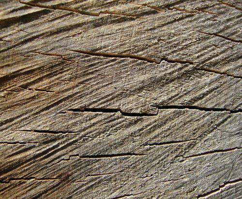 wood grain tree stump tree rings