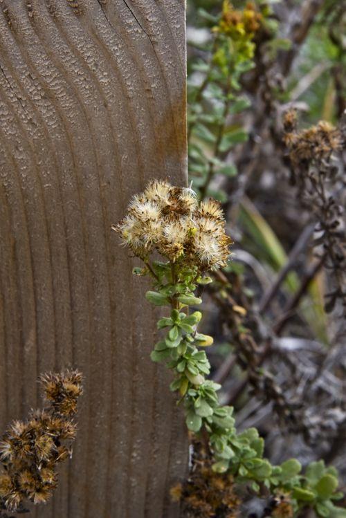 Wood Post Golden Wildflower